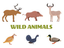 Wild forest animals with boar, deer, moose, duck, grouse and partridge. Royalty Free Stock Photo
