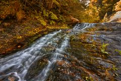 Wild forest in autumn Royalty Free Stock Photos