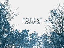 Wild forest background Stock Photos