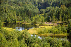 Wild forest and bending river. Beautiful forest and meadow view near bending river stock photography