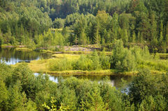 Wild forest and bending river. Beautiful forest and meadow view near bending river stock photos