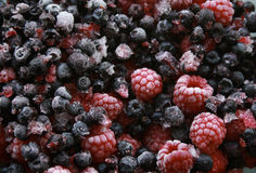 Wild Forest Berries. A heap of fresh forest berries all frozen royalty free stock photo