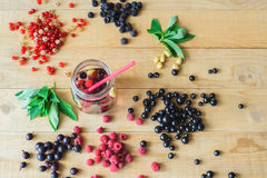 Wild forest berries Royalty Free Stock Images