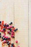 Wild forest berries Stock Photos