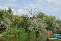 Wild forest and catamaran at river Stock Image