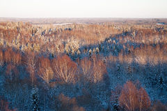 Wild forest covered with snow in winter. Shot in golden hour when sun was almost set Royalty Free Stock Photo