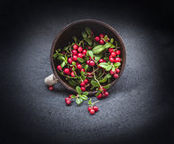Wild forest cowberry with leaves spilled from round clay pipkin dish on dark black corners background. Front Royalty Free Stock Image
