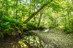 Wild forest with creek - high dynamic range Stock Photography