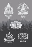 Wild Forest and Ecotourism typographic retro labels, vintage badges and logo signs  on the background with fir trees landscape. Gr Stock Photos
