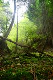 Wild forest with fallen tree Stock Photography