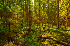 Wild forest Stock Photos