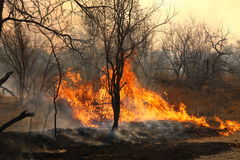 Wild Forest Fire Stock Photo