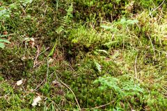 Wild forest grass background, green foliage.  royalty free stock photos