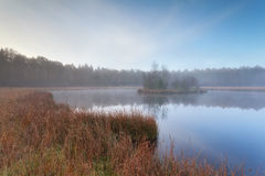 Wild forest lake in autumn Royalty Free Stock Images