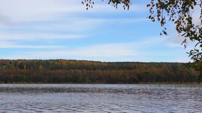 Wild forest lake panorama in autumn stock video