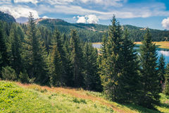 Wild forest and lake under the sun Stock Photography