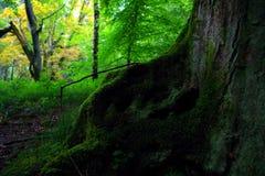 Wild forest. Landscape in National Park Czech Switzerland, Czech republic, Europe royalty free stock photo