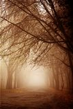 Morning forest in thick fog royalty free stock photography
