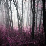 Morning forest in thick fog stock images