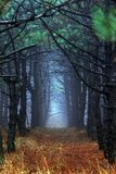 Morning forest in thick fog royalty free stock image