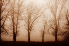 Morning forest in thick fog stock image