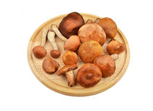 Wild forest mushroom on wooden board Royalty Free Stock Photography