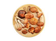 Wild forest mushroom on wooden board Stock Photography