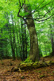 Wild Forest Stock Photography