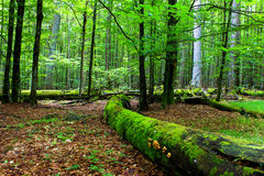 Wild Forest Stock Images