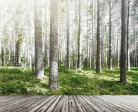 Wild forest panorama Stock Images