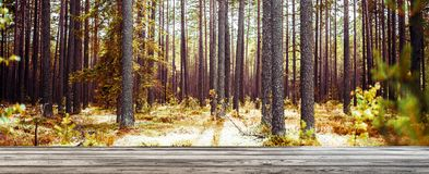 Wild forest panorama Royalty Free Stock Images