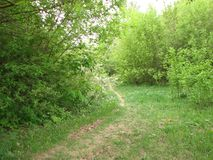Wild forest path in spring stock images