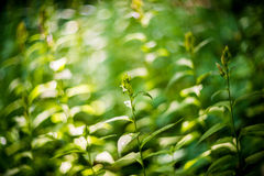 Wild forest plants Stock Photos