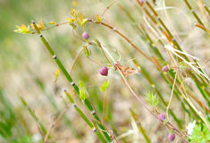Wild forest plants Royalty Free Stock Image