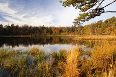 Wild forest pond at sunrise Stock Images
