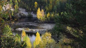 Wild forest river in autumn stock footage