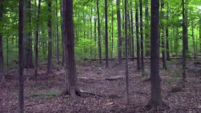 A wild forest on a summer day. A green forest on a summer day stock video footage