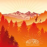Wild forest. Sunrise, mountains, pine and spruce. Eagles, and birds in flight. Tourism and travel. Camping. The horizon line. The horizon line in the fog vector illustration