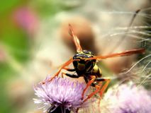 Wild forest wasp in flowers Stock Photography