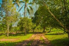 A wild forest in Zanzibar. A green forest in Zanzibar Stock Photography