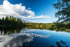 Wild forrest and lake Royalty Free Stock Photography