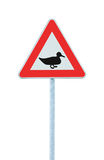 Wild Fowl Duck Crossing Ahead Warning Traffic Road Sign, Large Detailed Isolated Roadside Beware Of Wildlife Birds Signage Closeup Royalty Free Stock Photos
