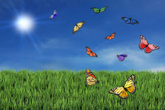 Wild and Free Butterflies Stock Photos