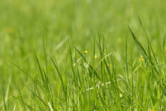 Wild fresh grass on the field Royalty Free Stock Photography
