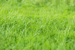 Wild fresh grass on the field Royalty Free Stock Photo