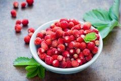 Wild fresh strawberries stock photo