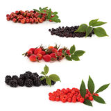 Wild Fruit Collection Royalty Free Stock Photos