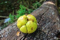 Wild fruit op een hout Royalty-vrije Stock Afbeelding