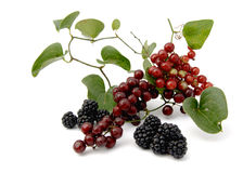 Wild fruits. Tavern isolated composed by wild fruits Royalty Free Stock Photos