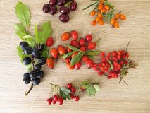 Wild fruits with barberries, cornelian cherries, sea buckthorn fruits, rose hips, sloes fruits and hawthorn fruits. Wild fruits in autumn with barberries Stock Image